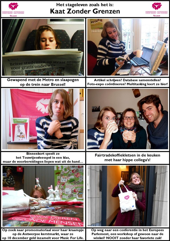 Kaat Zonder Grenzen - photoshop 550px
