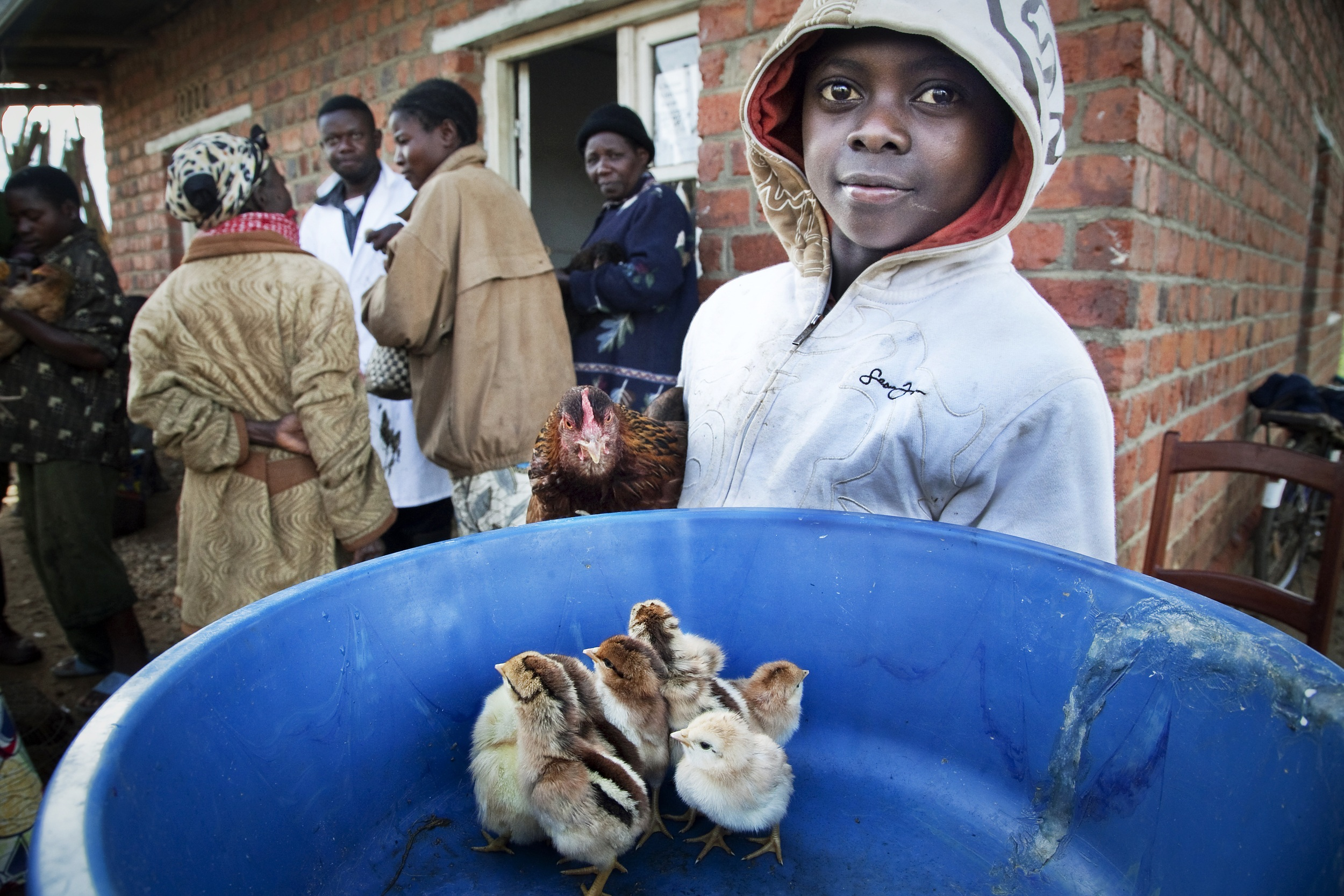 Dierenartsen Zonder Grenzen, DR Congo (c) Tim Dirven